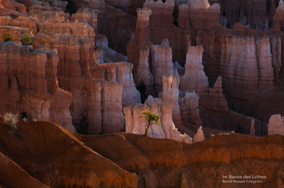Lonely Tree (Bryce Canyon)
